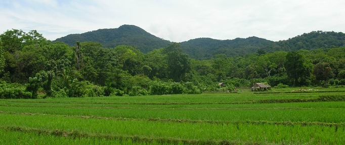 the landscape of ujungkulon national park