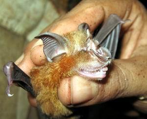 bats again