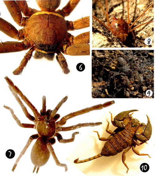 The diversity of arachnofauna in Batanta Island